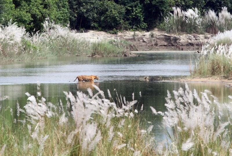 Nepal – landet där jakt är förbjuden!