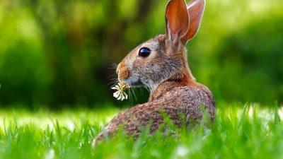 Jakttidsberedningen – Nu behövs allas röster för att skydda de vilda djuren!  Skriv ett eget remissvar!