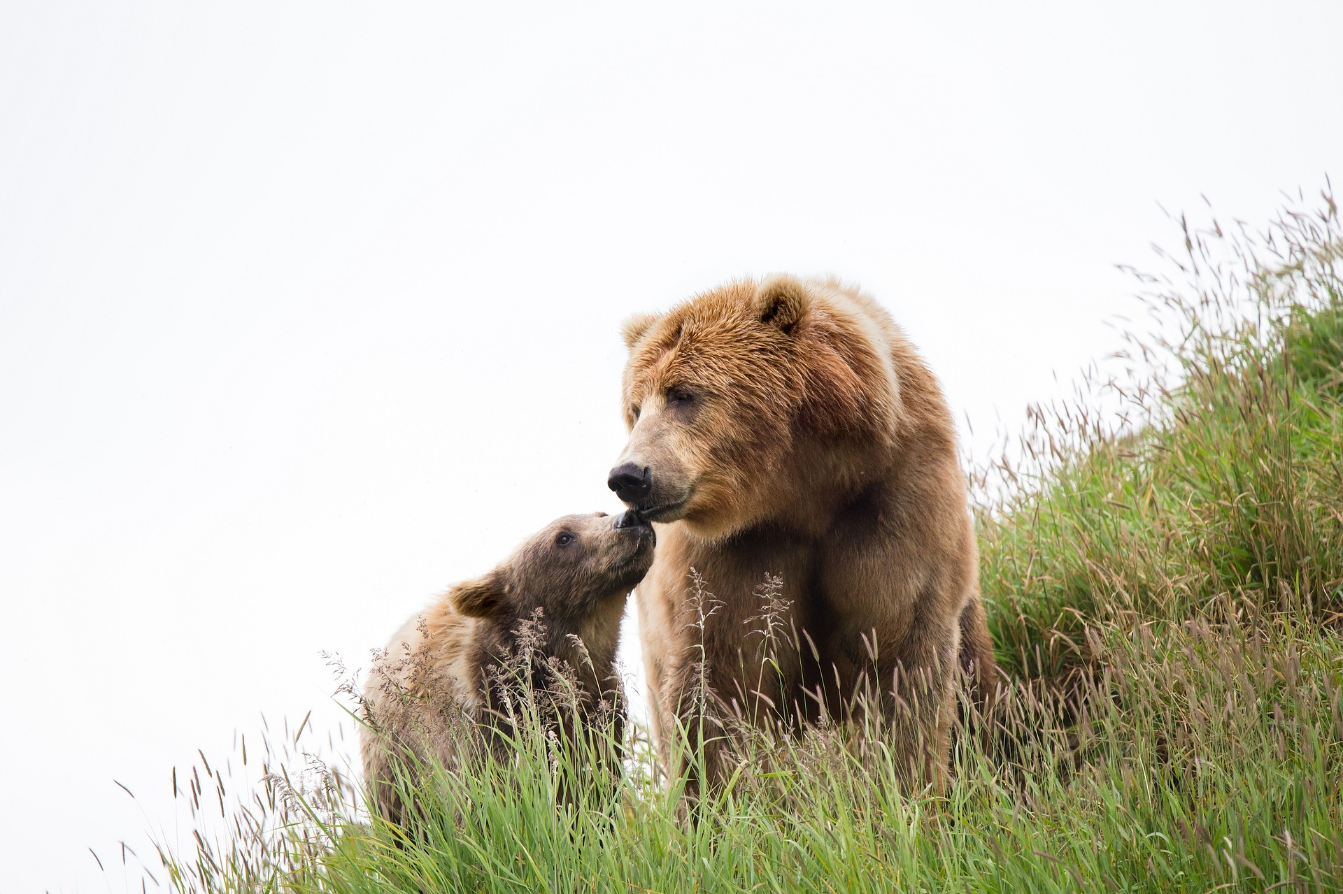 Förbjud jakt på björn med lösa hundar!