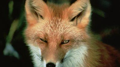 Mitt liv är endast värt 120 poäng – i en jakttävling som heter Rovdjurskampanjen